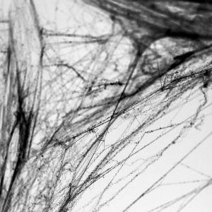 Decoratie spinnenweb zwart