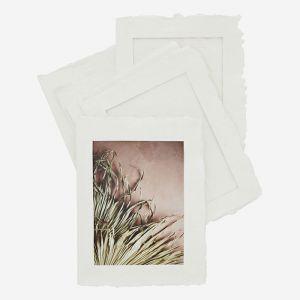Fotoframes Cotton (6st) Madam Stoltz