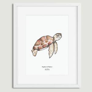 Aquarel illustratie schildpad door Sophie de Ruiter